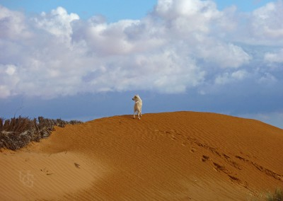 Tunesischer Wüstensand