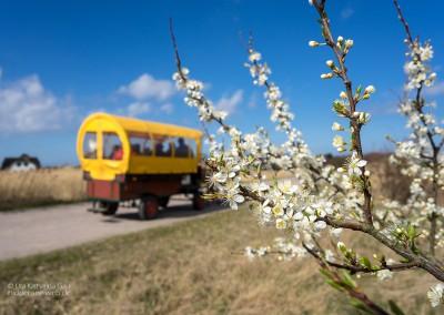 Pferdegetrappel und Blütenträume