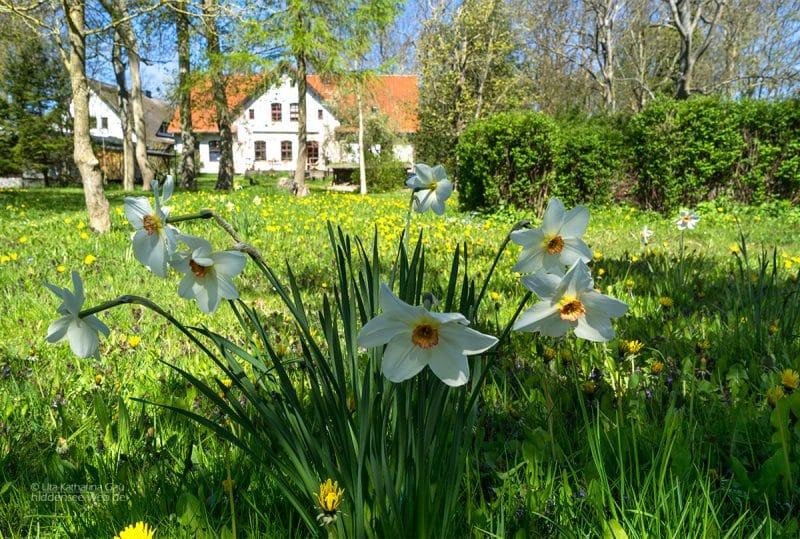Frühling im Pfarrgarten