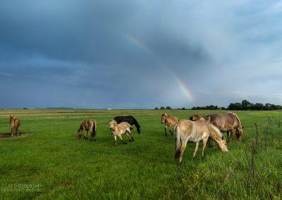 Regenbogenpferde