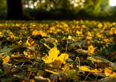 Herbstfarben im Pfarrgarten