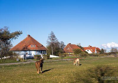 Pferde vor dem Asta Nielsen Haus