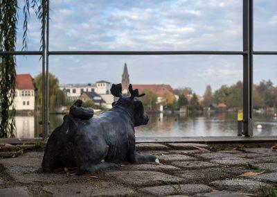 Waldmops in Brandenburg